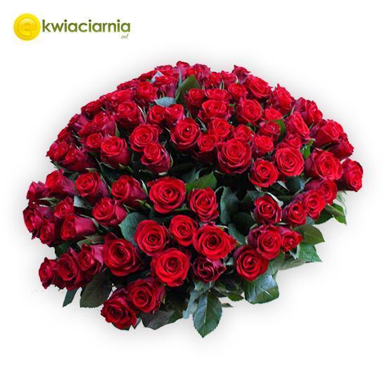 Bukiet 100 krótkich róż